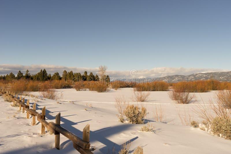 Tahoe海岸 库存照片