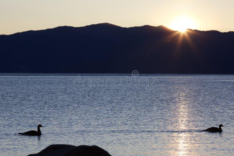 Tahoe kaczki obraz stock