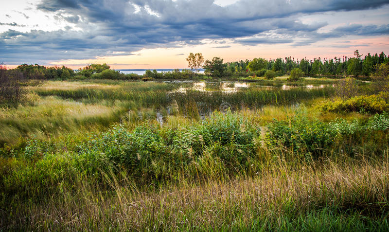 Tahquamenon-Fluss-Sumpfgebiet-Lebensraum stockbild