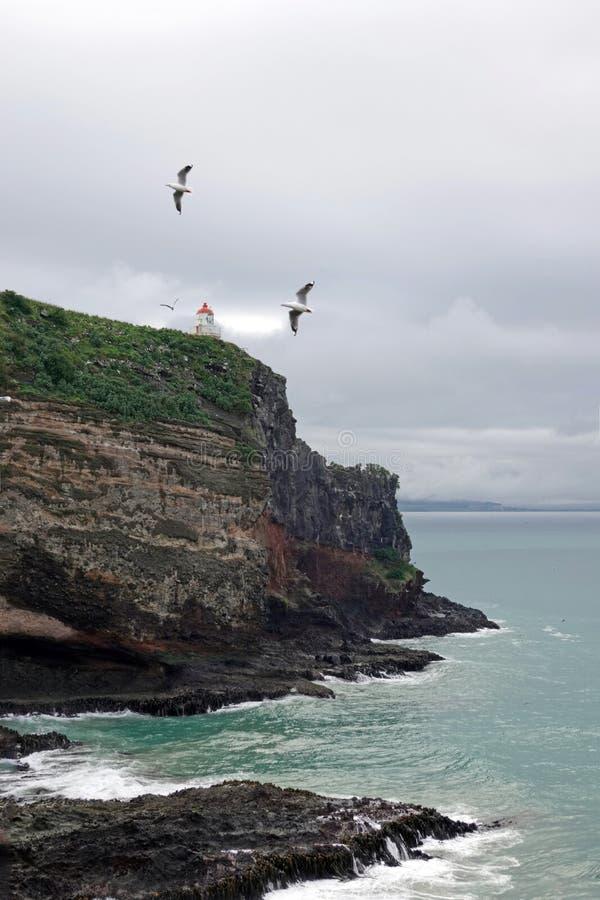 Taiaroa huvud på den Otago halvön nära Dunedin, Nya Zeeland arkivfoton