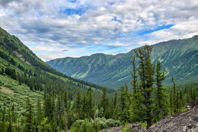 Taiga conifére foncé de montagne en Sibérie orientale images libres de droits