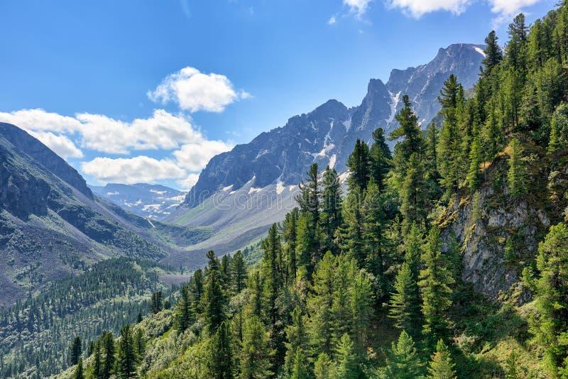 Taiga conifero scuro sul fianco di una montagna a luglio fotografia stock