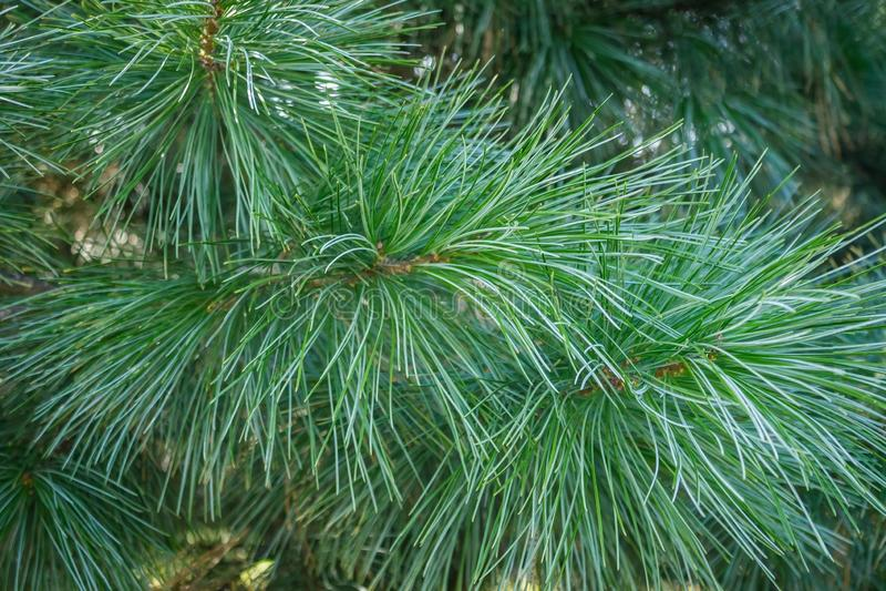 Taiga, coniferous лес стоковые изображения rf