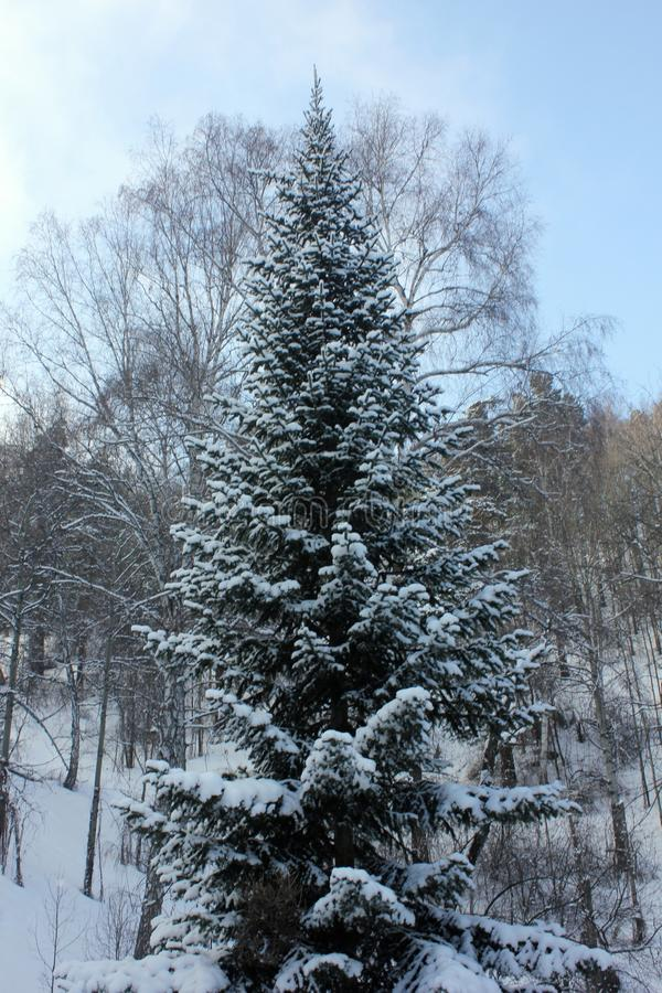 Taiga de Sibérien de nature d'hiver image stock