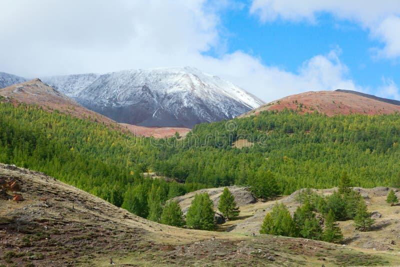 Taiga do Siberian da montanha foto de stock royalty free
