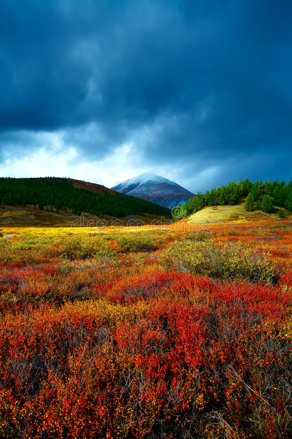 Free Taiga Meadow Stock Photos - 31406173