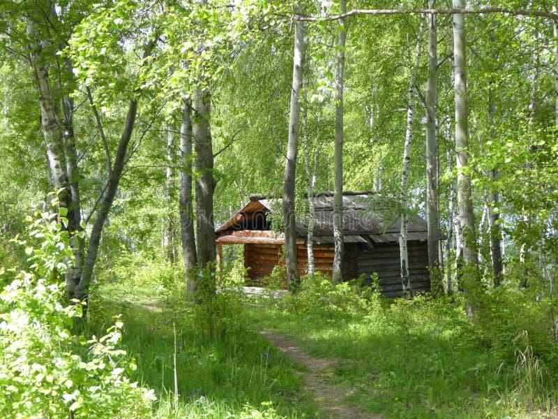 Taiga Siberian da floresta baikal Floresta do vidoeiro imagens de stock royalty free