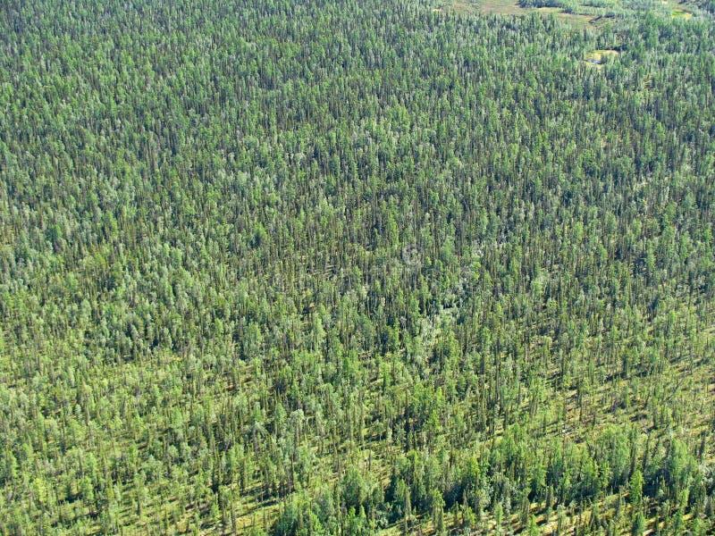 Taiga Siberian - vista aérea fotografia de stock royalty free
