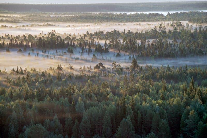 Taiga Ural fotos de archivo