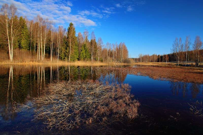 Taiga van Finland Meer met bos en blauwe hemel Landschap van het noorden van Europa royalty-vrije stock foto's