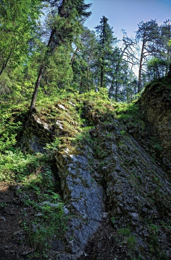 Taiga Wald lizenzfreies stockbild