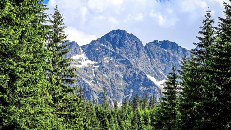 Taiga y montañas Naturaleza salvaje Lat del alerce siberiano El sibirica del Larix en las montañas estos árboles puede alcanzar l foto de archivo libre de regalías