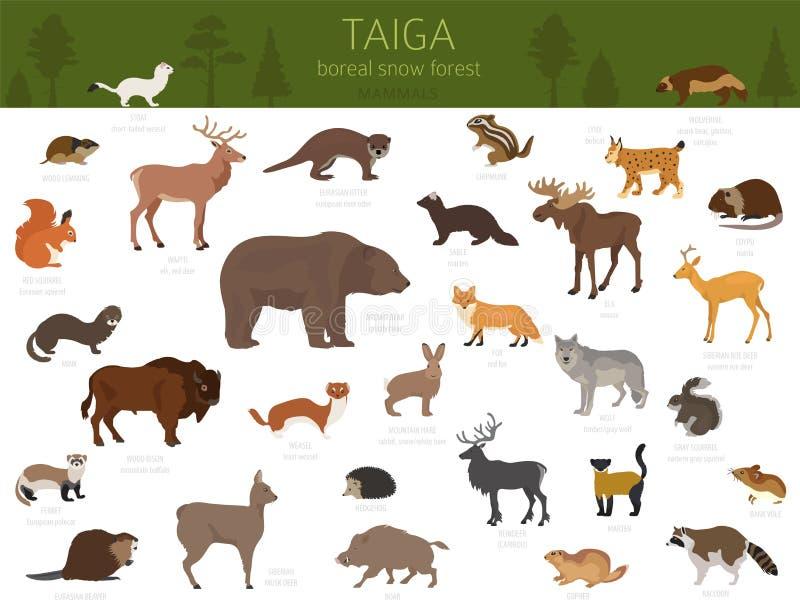 Taigabioma, boreale de wereldkaart van het sneeuw bosterrestrische ecosysteem Dieren, vogels, vissen en planten infographic ontwe vector illustratie