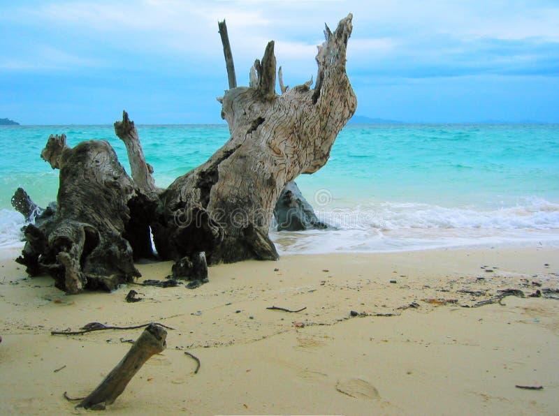 Tailândia - praia V do paraíso imagem de stock royalty free