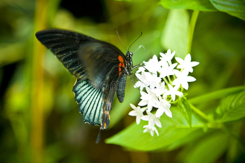 Tail butterfly stock image