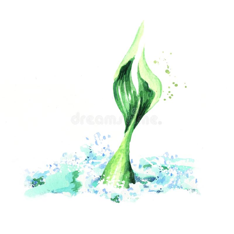 Tail of a mermaid diving out of the water. Watercolor hand drawn illustration, isolated on white background.  stock illustration