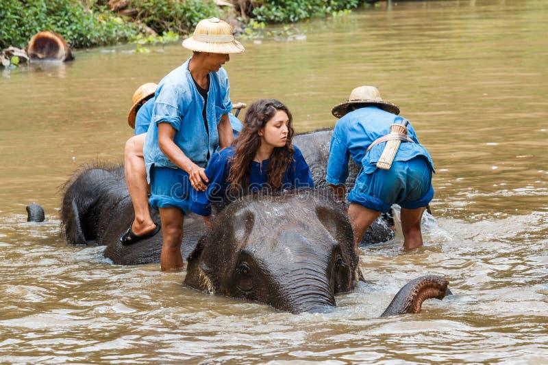 Tailandia, elefante con el Mahout, centro de la protección del elefante de Tailandia fotografía de archivo