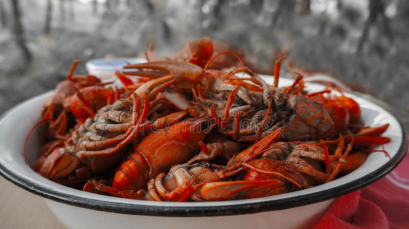 Tailed boiled crayfish, food from river dwellers stock images