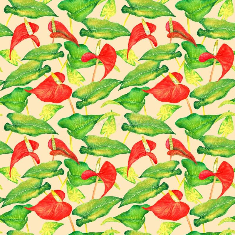 Tailflower dell'anturio, fiore di fenicottero, fiori rossi del laceleaf e foglie verde intenso fotografia stock