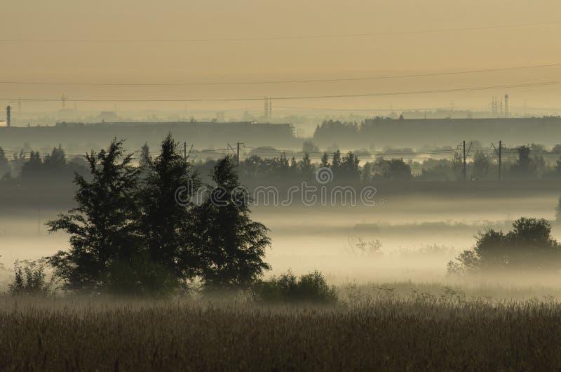 Taillis dans la brume de matin sur le fond des lignes électriques image stock