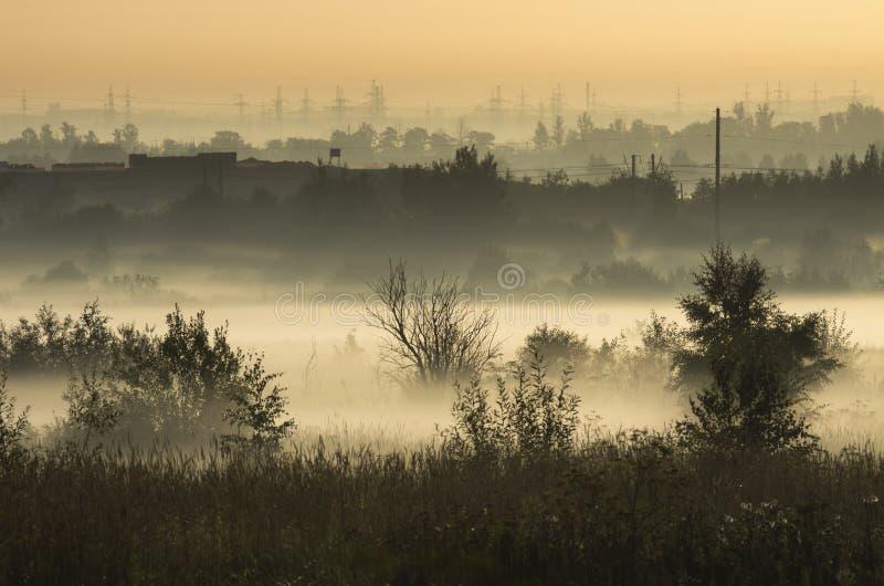 Taillis dans la brume de matin sur le fond des lignes électriques images libres de droits