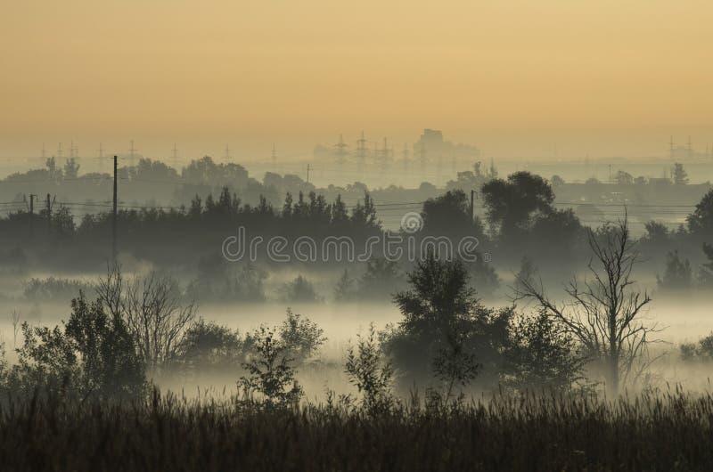 Taillis dans la brume de matin sur les périphéries de la ville photographie stock libre de droits