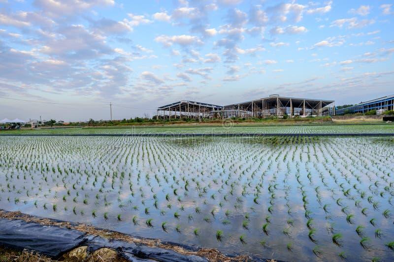 Tainan Liujia Linfengying, Taiwan - 26 de janeiro de 2018: Exploração agrícola de Linfengying no inverno e cercada com campo de a foto de stock royalty free