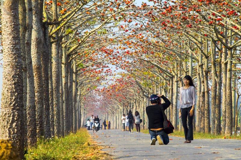 Koyubloei van Tainan Shirakawa royalty-vrije stock foto's