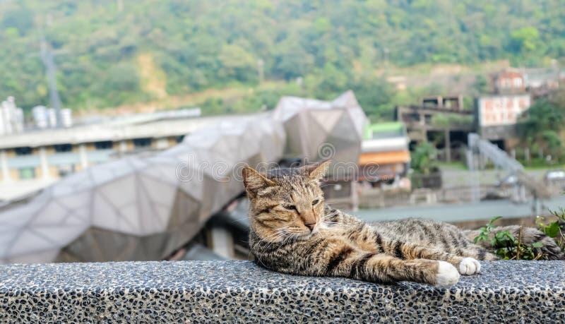 Taipei-10 APR 2017:cute street cat closeup view. Taipei-10 APR 2017:cute street cat sleeping on bridge royalty free stock photo
