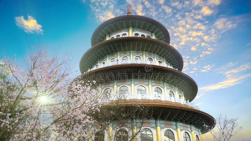 Taipei City,Taiwan - Apr 12,2019 : View point Sakura cherry blossom at Tianyuan temple,The Tianyuan temple is famous for its stock images
