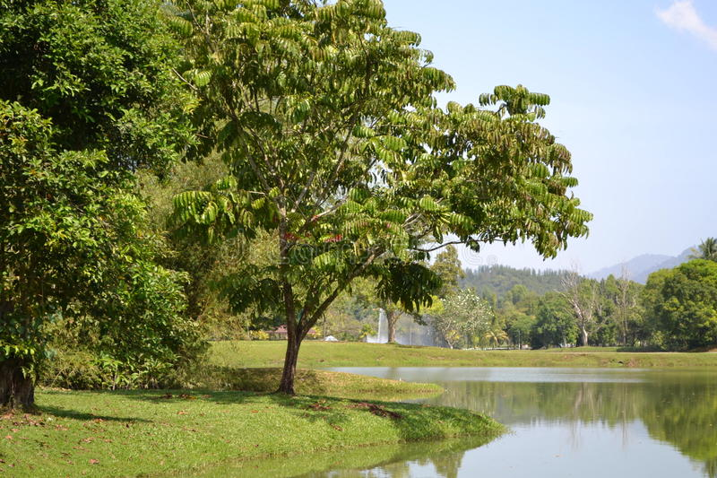 Taiping Lake Park (Taman Tasik Taiping) royalty free stock images