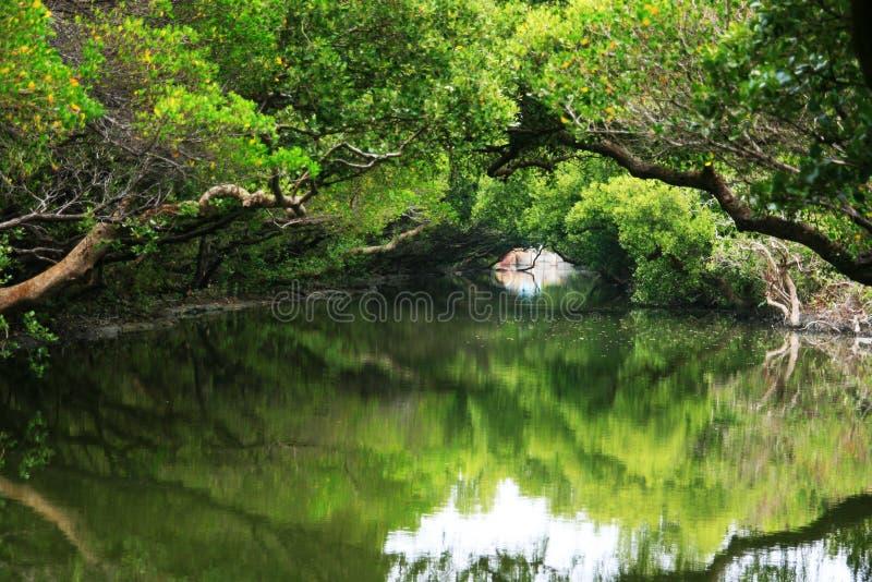 Taiwan green tunnel on water stock photo
