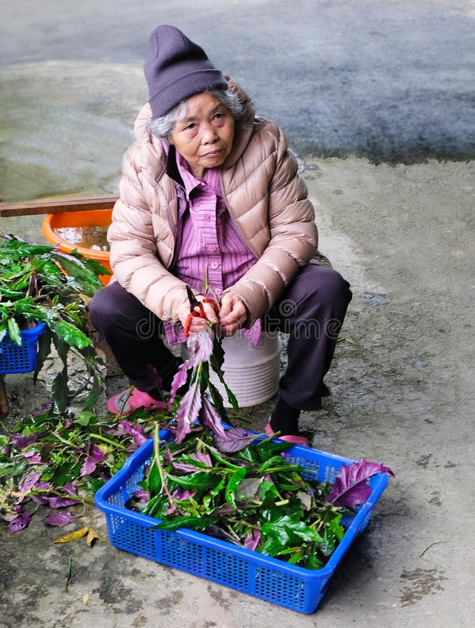 Taiwan 03/21/2018: La donna asiatica di Eldely elabora i prodotti agricoli fotografia stock