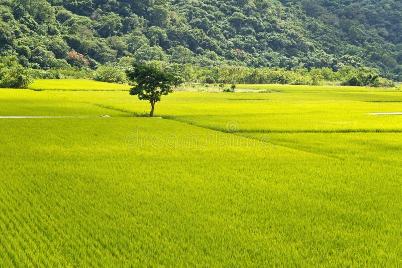 Taiwan lantligt landskap arkivfoto