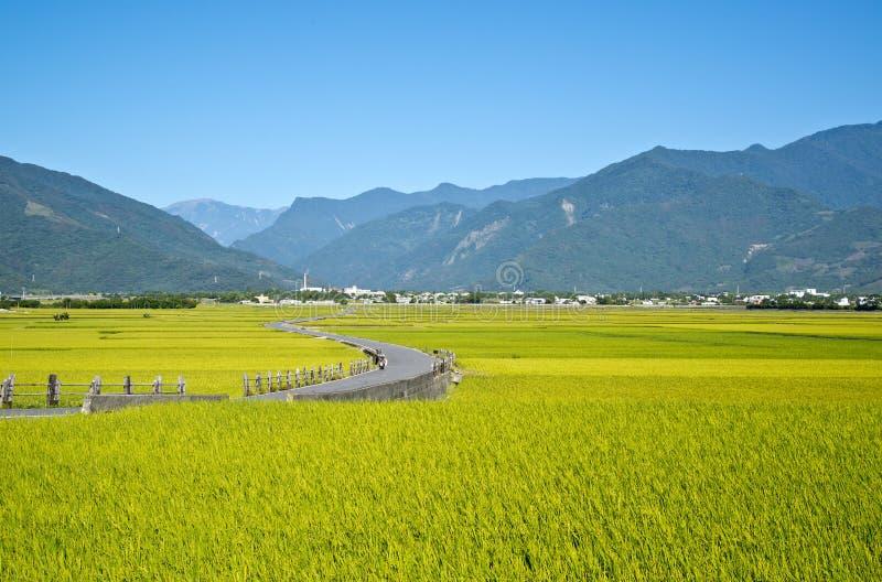 Taiwan lantligt landskap arkivbild