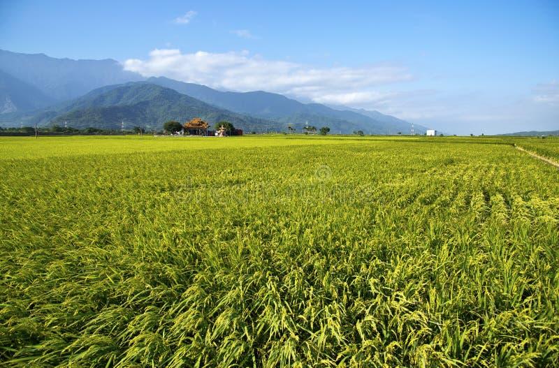 Taiwan lantligt landskap royaltyfria foton