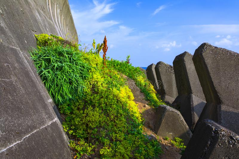 Taiwan, New Taipei City, Keelung, North Coast, Coast, Breakwater, Wave Block, Beautiful Flower Trail royalty free stock photography