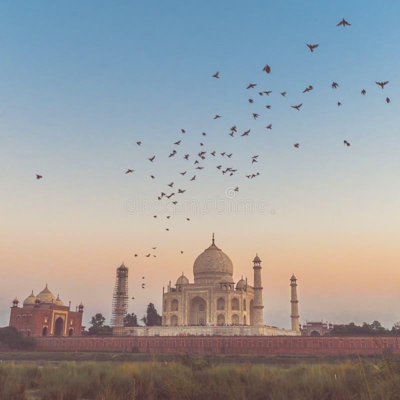 Taj Mahal avec le coucher du soleil et voler d'oiseaux images stock
