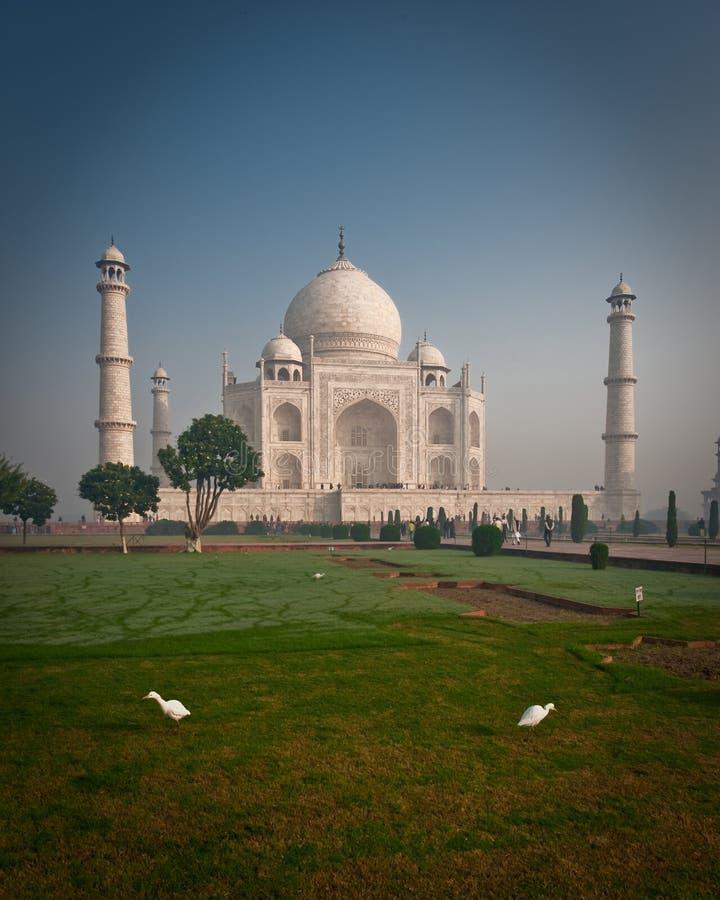 Taj Mahal con los pájaros fotos de archivo
