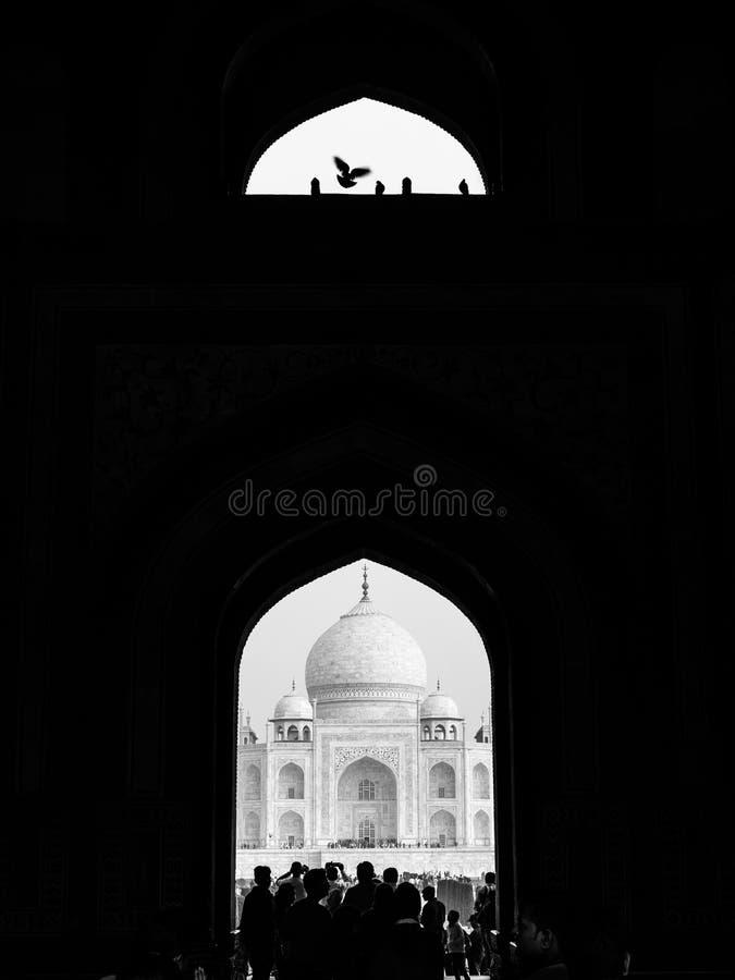 Taj Mahal e pássaro em um quadro imagem de stock
