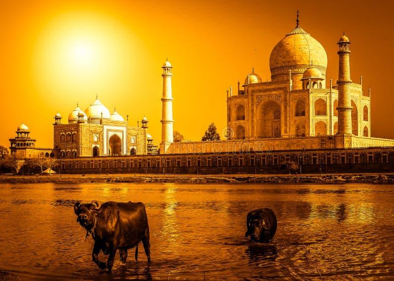 Taj Mahal en de rivier stock afbeelding