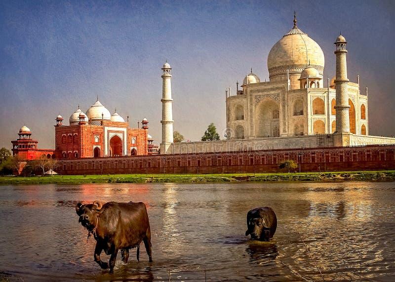 Taj Mahal en de rivier royalty-vrije stock foto's