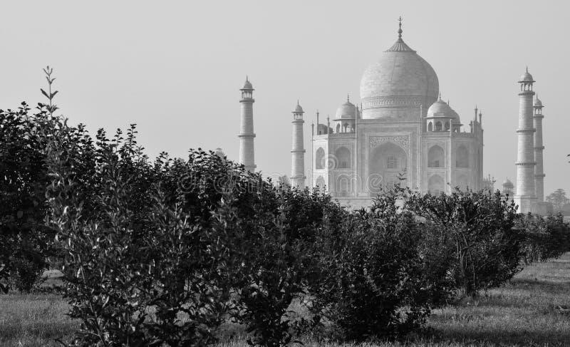Taj Mahal från måneträdgårdarna, Agra Indien B/W royaltyfri foto