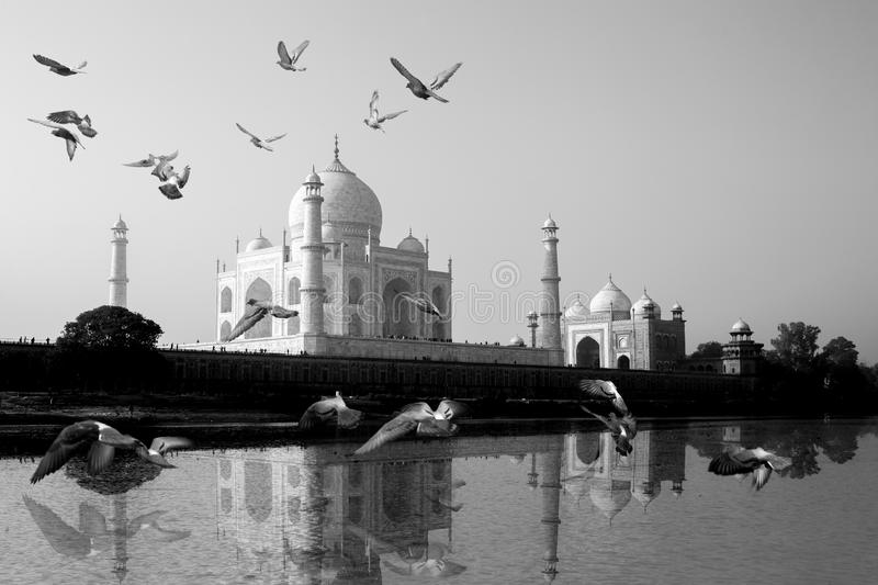 Taj Mahal reflected in Yamuna River view with bird flying across. stock images