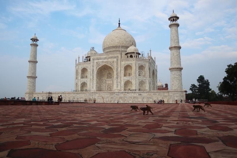 Taj Mahal is a white marble mausoleum on the bank of the Yamuna river in Agra city, Uttar Pradesh state - Image. Taj Mahal is a white marble mausoleum on the royalty free stock image