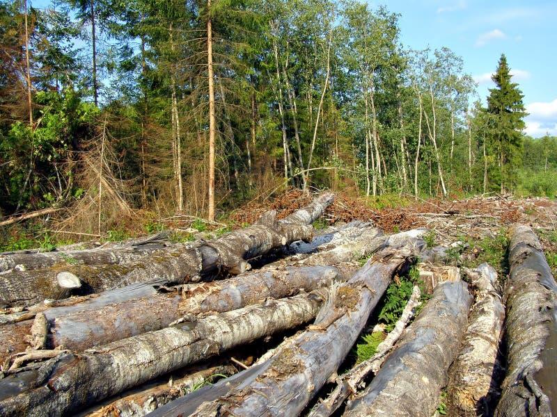 Download Tajar la madera foto de archivo. Imagen de conservación - 7151536