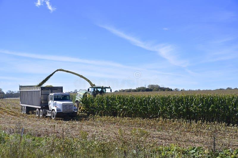 Tajar maíz del ensilaje foto de archivo