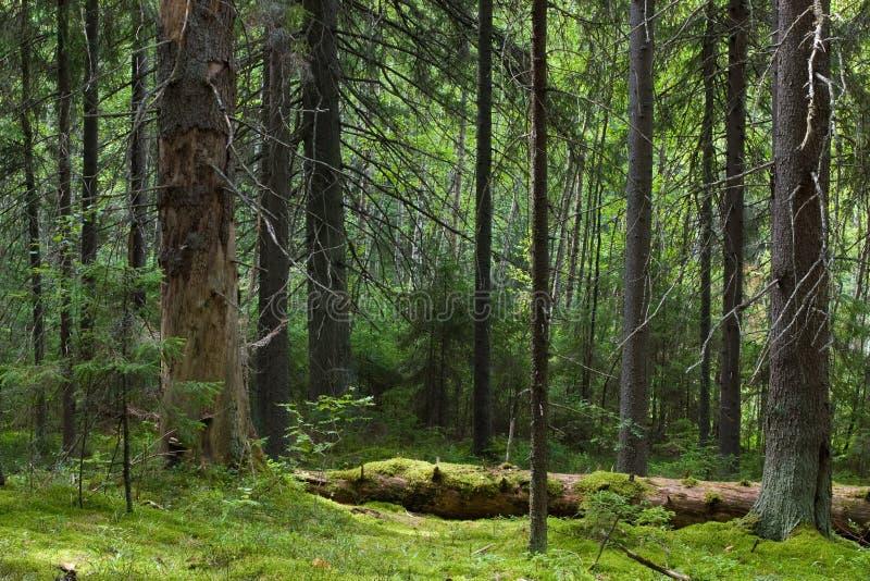 tajemnica leśna fotografia stock