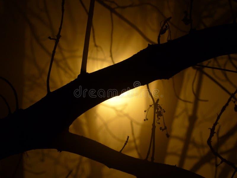 Tajemnica w lesie za mgłą obrazy stock