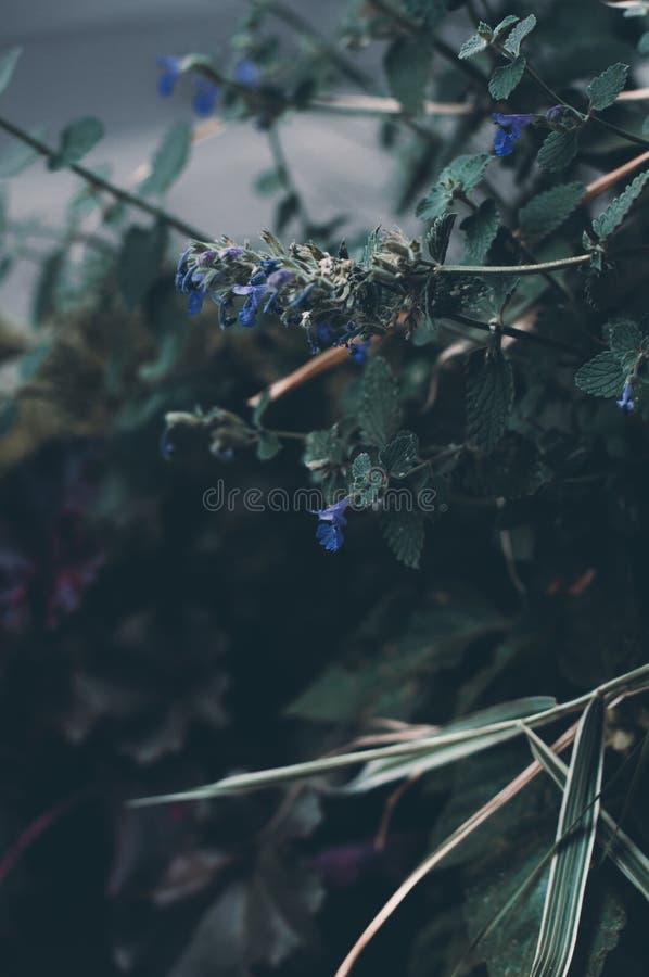 Tajemnicy kwitnienia błękitnych małych kwiatów zamknięty up Makro- Natura zdjęcia royalty free